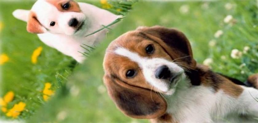 Köpeklerde Sağlıklı Tüyler Ne Anlama Gelir