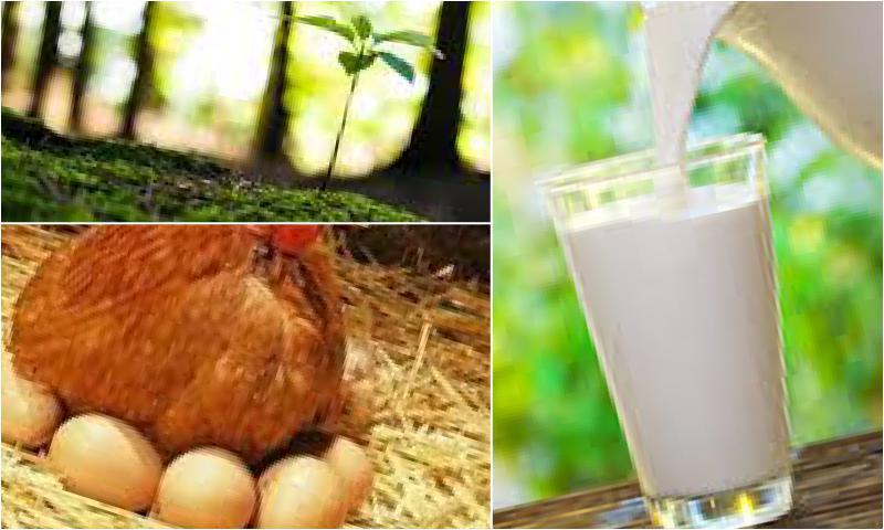 Geleneksel Usullerle Üretilen Süt Ürünleri