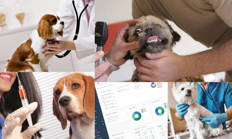 Veteriner Pet Takip Programı