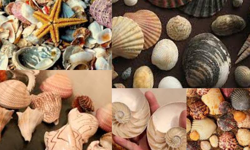 Deniz Kabuğu Koleksiyonu Nasıl Yapılır